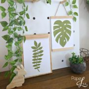 Robinia & Monstera
